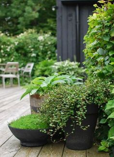 Green + black outdoor space