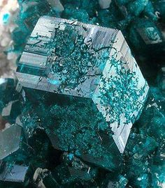 This remarkable specimen features largest single dioptase crystals I