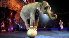 elephant circus的圖片搜尋結果