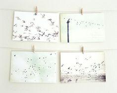 Bird Postcard Set -  Bird cards flock of birds Fine Art photography birds on a wire photo white neutral tones pale mint