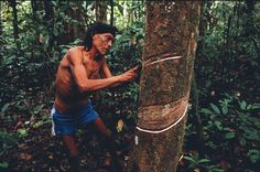 'Ghost population' hints at long-lost migration to the Americas. Ibalaba (shown extracting latex from a rubber tree), a man from the Amazonian Surui tribe, whom researchers have found bear genetic traces of a long-lost migration to the Americas thousands of years ago.
