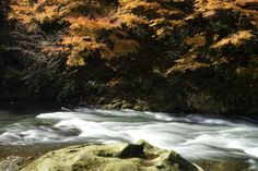 紅葉の鶴仙渓 石川県加賀市