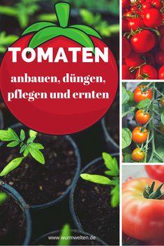 80 Besten Tomaten Anbauen Bilder Auf Pinterest In 2018 Harvest