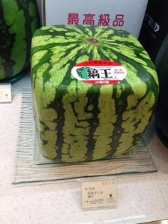 Real life Minecraft, only in Japan. - Don't Hate The Geek