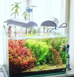 Nano jungle www.ibrio.it your aquarium born here ! il tuo acquario nasce qui ! https://www.facebook.com/ibrio.it #ibrio #acquario #acquari #acquariologia #acquariofilia #aquarium #aquariums #piante #natura #pesci #zen #design #arredamento #layout #layouts #layoutdesign #roccia #roccie  #moss #freshwater #plantedtank #aquadesignamano #tropicalfish #fishofinstagram #aquaticplants #natureaquarium #nanotank #reefkeeper #nanoreef #saltwateraquarium