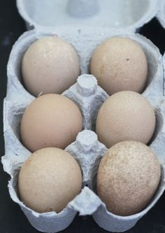 guinea fowl eggs