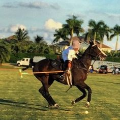 Florida | 2014 USPA Kay Colee Memorial Cup | Grand Champions Polo Club -