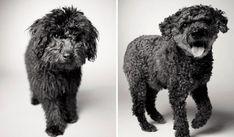 Rufus: 6 meses / 13 anos
