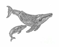 Whale Drawings - Humpback and Calf by Carol Lynne
