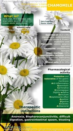 Chamomile benefits. Chamomile plant properties. Scientific name, Identification. Active ingredients and content of Chamomile. Summary of the general characteristics of the Chamomile plant. Medicinal properties, benefits and uses more common. http://www.medicinalplants-pharmacognosy.com/herbs-medicinal-plants/chamomile/benefits-infographic/