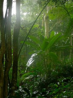 Wilde Tropical Showers near Ciales, Puerto Rico!! Deeply Peaceful!