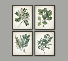 Green Leaves Art Print Set of 4 Botanical Print Vintage Wall Botanical Decor, Vintage Botanical Prints, Botanical Wall Art, Botanical Kitchen, Vintage Wall Art, Vintage Walls, Free Art Prints, Wall Art Prints, Wall Art Sets