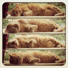 Lazy Sunday (=^..^=)