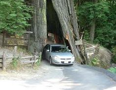 california redwoods poached - Google Search