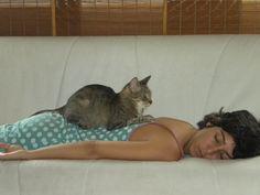 gatoterapia