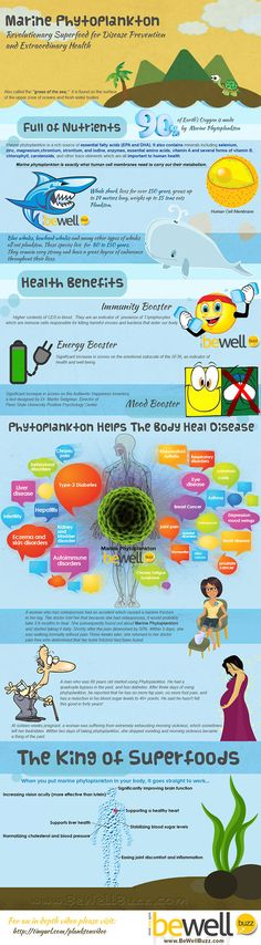Marine Phytoplankton: The Infographic bewellbuzz.com    Also see OceansAlive for a great high quality product