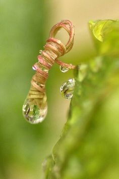 raindrop tendril © Pat  French