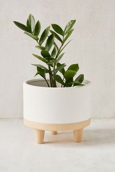 Container Gardening - An Answer To Minimal House For Increasing Vegetation Liv 8 Footed Planter Belle Plante, Best Indoor Plants, Outdoor Plants, Plantation, Green Life, Minimalist Home, Plant Decor, Potted Plants, Potted Flowers