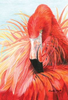Red FlamingoColored pencil drawing ***** I was commissioned by the Derwent pencil company in the United Kingdom to do a flamingo similar to this in they have it displayed on their newest colored pencil set packages! by Carla Kurt Flamingo Painting, Flamingo Art, Pink Flamingos, Flamingo Garden, Flamingo Photo, Afrique Art, Pink Bird, Coloured Pencils, Color Pencil Art