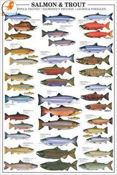 Infografías de peces 3