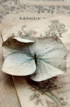 tenderblue