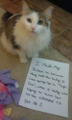 Cat Shaming | Dog Cat Shaming + 1 Bunny / Cat shaming ...........click here to find out more http://googydog.com