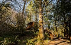Stay In A Treehouse, Mount Hood National Forest, Oregon Forest, Travel Dating, Beautiful Forest, Smoke Alarms, Cozy Place, Wonderful Places, Wilderness
