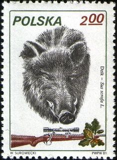 Wild Boar, Postage Stamps, Hunting, Gallery, Movie Posters, Art, Seals, Poland, Art Background