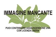 Immagine di Garcinia hanburyi mancante Take inches off your waistlines without diet or exercise. Get a Free Trial of Garcinia Cambogia today!