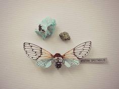 Ghost Cicada by Entomology101 on Etsy, $70.00