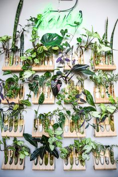 This propagation wall is everything   Baltimore Home Filled Floor To Ceiling With Plants