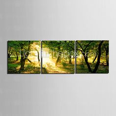 Stretched Canvas Art Landscape Yellow Light though the Forest Set of 3 - USD $ 59.99