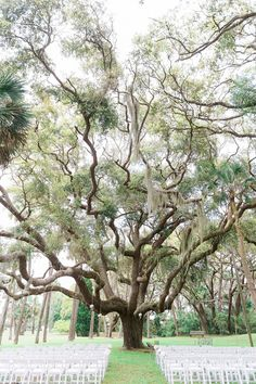 A Southern Wedding at The Ribault Club in Fort George Island, Florida Florida Events, Florida Wedding Venues, Outdoor Wedding Venues, Wedding Locations, Rustic Garden Wedding, Whimsical Wedding, Florida Trees, Tree Wedding, Wedding Bells