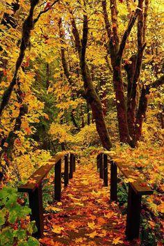 TwistMaterialz: Forest Bridge, Toketee Falls, Oregon!