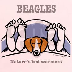 Beagle bed warmers - I've always wondered how my dog can breathe while sleeping all the way under the covers...
