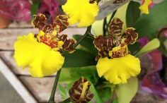 Stunning and exotic orchids found at Alsip Home & Nursery.