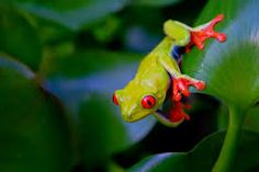 frogs colorful - Google Search