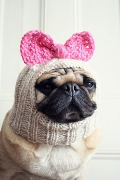 Dog Hat - Betty Bow Hat, All You Need is Pug, from jessicalynneart on etsy...so cute!!