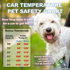Car Temperature Pet Safety Chart