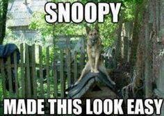 A German Shepherd trying to be Snoopy - Funny Dog Quotes - A German Shepherd trying to be Snoopy The post A German Shepherd trying to be Snoopy appeared first on Gag Dad. Funny Animal Quotes, Cute Funny Animals, Funny Cute, Funny Dogs, Hilarious, Funny Shit, Funny Stuff, Love Dogs, Mundo Animal