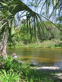 Peace River. Arcadia, Florida Great place to find sharks teeth and other fossils.