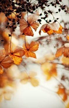 Flowers styled | Autumn foliage | Hydrangea | Seadheads | #fall