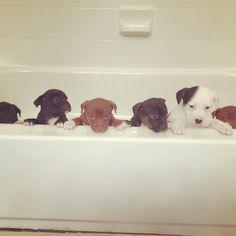 First ever bath for these rescued pups.