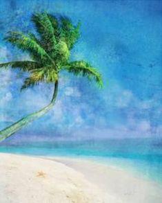 Palm Beach and Starfish