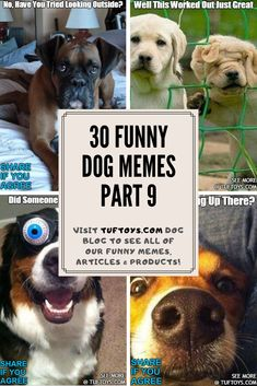 See Fun New Pictures Of Adorable Dogs Like Schnoodles, Goldendoodles & Peekapoos & Find Out What They're Really Thinking With Our Hi-Tech Brain Reading Equipment, Only @ TufToys.com :) Funny Dog Memes, Funny Dogs, Cute Dogs, Funny Animals, Dog Lover Gifts, Dog Lovers, Funny Share, Durable Dog Toys, Awkward Moments