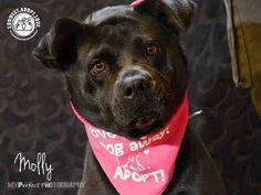 ## SUPER URGENT ## At Risk To Be Killed: Sep 18, 2016 Reason: Other Molly: **CODE RED** I have been at the shelter since May 23, 2016 I am an unaltered female, black Labrador Retriever mix The shelter staff thinks I am about 3 years old ***PLEASE HELP ME - MY TIME IS LIMITED** MOLLY located in Doral, FL