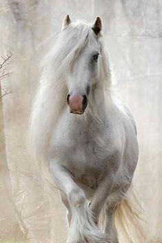 Beautiful Horse Pictures, Beautiful Arabian Horses, Most Beautiful Horses, Majestic Horse, Pretty Horses, Animals Beautiful, Cute Animals, Animals And Pets, Rare Horses