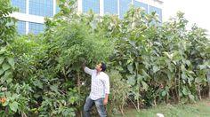 Un entrepreneur indien crée des petites forêts en milieu urbain