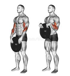health photos Photo about Reverse plate curls. Exercising for bodybuilding Target muscles are marked in red. Illustration of shoulder, biceps, place - 68285579 Forarm Workout, Big Biceps Workout, Dumbbell Workout, Gym Workout Chart, Gym Workout Tips, Fitness Workouts, Weight Training Workouts, Chest Workouts, Bodybuilding Workouts