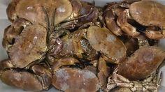 Noordzee krab